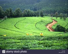 Bolobedu Landscape Golf Courses, Landscape, Scenery, Corner Landscaping