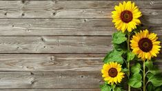 Autumn background with sunflowers on wooden board Cake Table Decorations, Fb Cover Photos, Sunflower Wallpaper, Background For Photography, Brown Wood, Photo Backgrounds, Textured Background, Photo Studio, Studio Backdrops