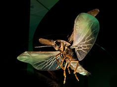 This model of a male blue ghost firefly, Phausis reticulate , is featured in a bioluminescence exhibit at the American Museum of Natural History. It is 65 times actual size. Found in the central and southeastern U.S., the blue ghost firefly makes light but does not flash.