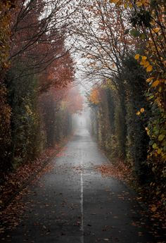 "decepticun: ""The Path | by Michael De Battista."""