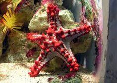 Risultati immagini per starfish