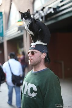¿Que utilidad puede tener tu gato ademas de compañía? los gatos, esas mascotas increíblemente independientes, cariñosas que dejan miles de imáge... Ver mas: http://www.mejorhistoria.com/fotos-gatos-cabeza/