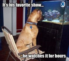 Funny Animal Pictures - View our collection of cute and funny pet videos and pics. New funny animal pictures and videos submitted daily. Funny Animal Pictures, Cute Funny Animals, Funny Cute, Dog Pictures, Funny Dogs, Funny Photos, Night Pictures, Animal Pics, Super Funny