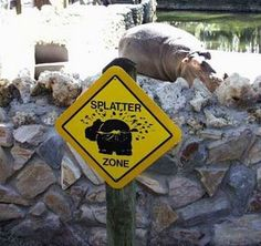 6.) Hint: that's not water coming off that hippo.