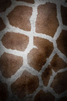 giraffe / repinned on toby designs