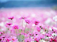 полевые цветы - Поиск в Google