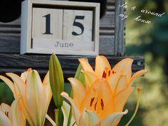 In & around my house : My summer ! My House, Garden, Summer, Garten, Summer Time, Lawn And Garden, Gardens, Gardening, Outdoor