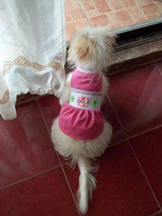 DIY Dog Dress!