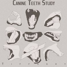 drawing anatomy reference Wolf/Canine Teeth Study by TIFFASHY on DeviantArt - Anatomy Reference, Art Reference Poses, Drawing Reference, Drawing Tips, Drawing Drawing, Dog Drawing Tutorial, Anime Wolf Drawing, Drawing Faces, Anime Art