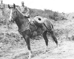 Sergeant Reckless, The Highly Decorated Marine Hero Horse of The Korean War