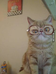 Cat with glasses ♥♥