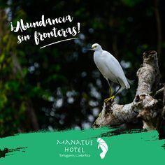 Cerca de 405 especies de aves embellecen los cielos de Tortuguero… ¡aproximadamente la mitad de las que hay en toda Costa Rica! #Ecoturismo