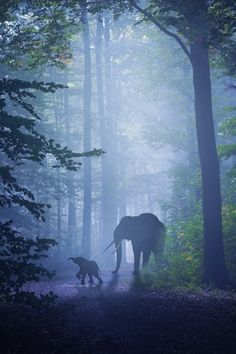 We're going this way by Nikita Gill.  Elephants walking in the shade of trees.