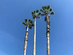"Joys of Avalon on Instagram: ""Lala Land, City of Angels, Los Angeles. More on my new blog www.joysofavalon.com #joysofavalon #losangeles #cityofangels #beverlyhills…"" City Of Angels, News Blog, Joy, Travel, Instagram, La La Land, Viajes, Glee, Destinations"