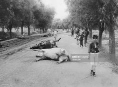 Second Sino-Japanese War; battle on Beijing: horses who where killed during a Japanese air raid on the street to Nanyuan airport- end of July 1937Photographer: Walter Bosshard