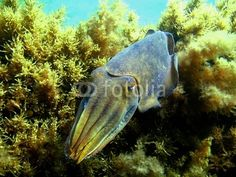 100 Breathtaking Underwater Photos – Photoshop and photography galleries Underwater Photos, Underwater World, Underwater Photography, Photography Gallery, Cool Photos, Photoshop, Stock Photos, Cuttlefish, Animals