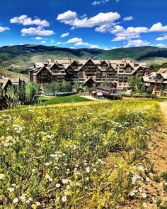 A hike among wildflowers leads to new & spectacular views at The Ritz-Carlton, Wildflowers, Avon, Colorado, Hiking, Explore, Instagram Posts, Nature, Summer, Outdoor