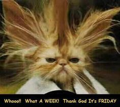 thank god is friday   Thank god it's friday!