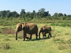 Up close with the Udawalawe elephants
