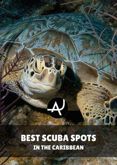 Discover the best diving spots in the Caribbean. Explore wrecks, dive with sharks or swim with sperm whales are just some of the experiences you can have in this fascinating area of the world.