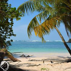 #sun #sand and #surf are waiting for you at #bubbashouse in #bastimentos #panama.  #bocasdeltoro #island #beautifulday #nofilter #photooftheday #nature #travel #amazing #island #