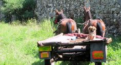 "©BLOGU' LU' DAN GHEMEŞ: Paznicu"" Montana, Dan, Horses, Animals, Flathead Lake Montana, Animales, Animaux, Horse, Animal"