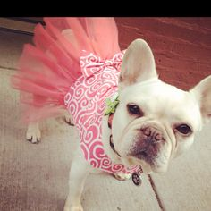 Collette's Dress