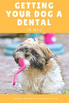 85 Best Dog Grooming Images In 2018 Dental Care Dog Health Tips