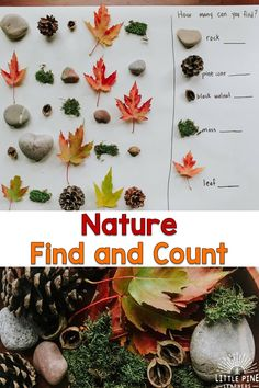 Here is a simple, inexpensive and beautiful nature math activity for kids! This is perfect for the homeschool or classroom setting and can be easily differentiated to meet the needs and interests of all young learners. Forest School Activities, Autumn Activities For Kids, Fall Preschool, Nature Activities, Preschool At Home, Classroom Activities, Learning Activities, Preschool Activities, Creative Activities For Children