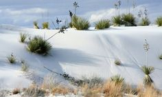 White Desert in New Mexico is known for its white sand dunes. At 1185 meters above sea level.
