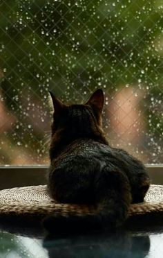 Mirando la lluvia