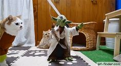 Yoda Training the Jedi Cats | Gif Finder – Find and Share funny animated gifs