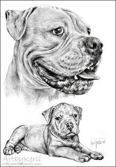 so beautiful american bulldog matthias pencil drawing art by kerli