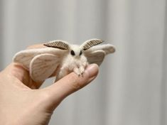 Did you know moths could be adorable? It's like a gremlin bunny with wings!