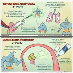 Sistema renina angiotensina aldosterona, BUAP,