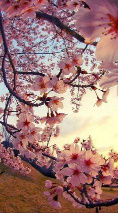 Wallpaper Nature Flowers, Flower Iphone Wallpaper, Beautiful Landscape Wallpaper, Spring Wallpaper, Flower Background Wallpaper, Beautiful Flowers Wallpapers, Scenery Wallpaper, Pretty Wallpapers, Beautiful Landscapes