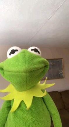 Frog Wallpaper, Aesthetic Iphone Wallpaper, Wallpaper Backgrounds, Hippie Wallpaper, Funny Profile Pictures, Funny Reaction Pictures, Funny Pictures, Sapo Meme, Kermit The Frog