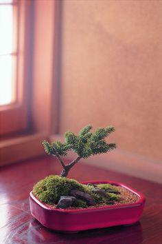 A tiny landscape inside Keshiki Bonsai by Kenji Kobayashi. Photo credit Mariko Nakagawa.