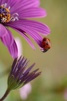 Ladybug Art and Ideas Shared :  More At FOSTERGINGER @ Pinterest