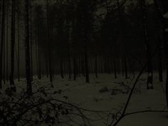 Боярський ліс в тумані, вночі Nature Aesthetic, Night Aesthetic, In The Pale Moonlight, Dark Landscape, Dark Fairytale, Modernisme, My Past Life, Vampire Weekend, Dark Places