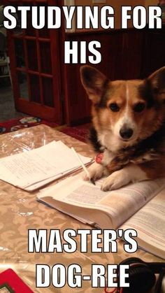 Actually, he's study for his Dog-torate!