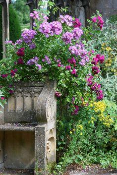 Beauty In the garden!