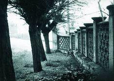 A witness to life. Trunks, Culture, Plants, Photography, Life, Prada, Blog, Fotografia, Drift Wood