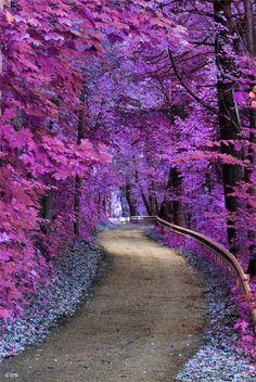 Paisajes de otoño en lilas y morados