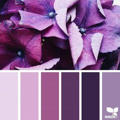 today's inspiration image for { flora hues } is by @georgiestclair ... thank you, Georgie, for another breathtaking #SeedsColor image share!