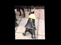 Check out this hilarious throw-back video of Canine Consultant Moe in his winter gear!