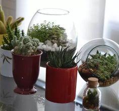 Aprenda a fazer um jardim no vidro para decorar a sua casa!