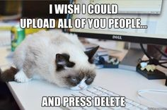 Yes, she hates people | Community Post: 14 Hilarious Grumpy Cat Memes That Will Make You Smile