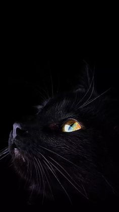 Here kitty kitty, crazy cats, cool cats, i love cats, beauti I Love Cats, Crazy Cats, Cool Cats, Pretty Cats, Beautiful Cats, Black Cat Aesthetic, Norwegian Forest Cat, Cats And Kittens, Ragdoll Kittens