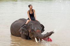 Volunteer with elephants: Thailand | South Africa | Cambodia. Read more: